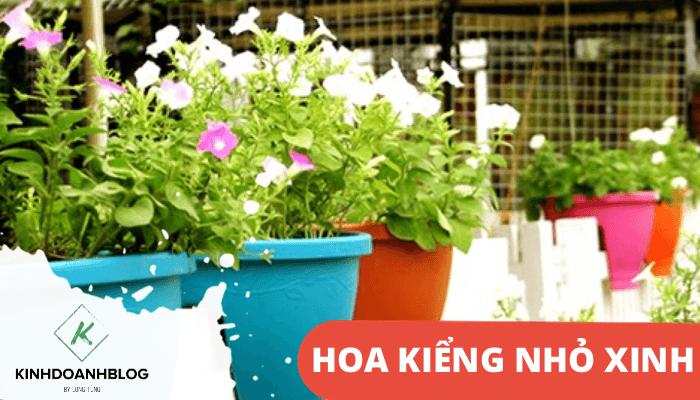 Bán các loại chậu hoa nhỏ, bonsai mini